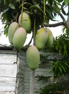 Frutas del Patio, Casa Don José Otaño